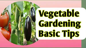 Gardening For Beginners Vegetables by Gardening Tips For Beginners How To Grow Best Vegetable Youtube