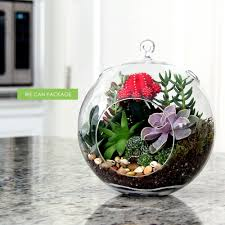 shapely hanging glass terrariums along with flat bottoms set also