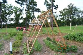 How To Make Trellis For Peas How To Build An A Frame Trellis For Beans Peas U0026 More Journey
