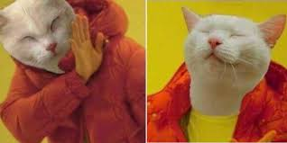 Drake Meme - this hotline bling drake meme now features a cat