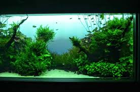 amano aquascape part the the aquascape nature style
