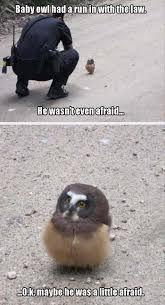 Funny Owl Meme - baby owl funny pictures quotes memes funny images funny