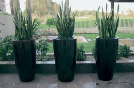 Cheap Patio Pots Download Outside Plants In Pots Solidaria Garden