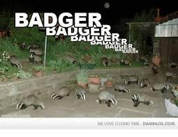 Badger Memes - 25 best memes about badger badger badger badger memes