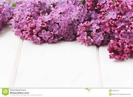 Lilca by Lilac Flowers Bouquet Stock Images Image 14235234
