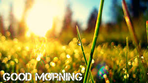 Salep Hd morning wallpapers free