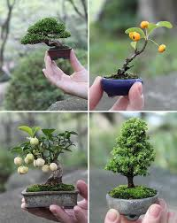 bonsai nature in the palm of your nippon com