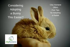 clay humane offers five tips to families considering adopting a