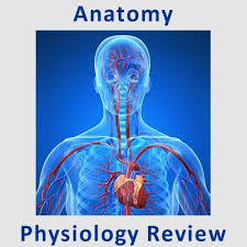 22 best anatomy u0026 physiology images on pinterest health