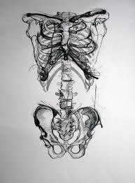140 best anatomy images on pinterest draw anatomy drawing and