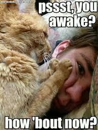 Cat Hug Meme - big cats love hugs too 11th may 2015