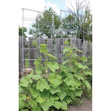 Climbing Plant Supports - trellis system for climbing plants gempler u0027s