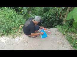 film ular phyton perilisan ular phyton youtube
