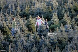 northern virginia faces shortage of cut your own christmas trees