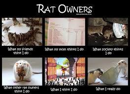 Rat Meme - rat facts sunshine scrapbook