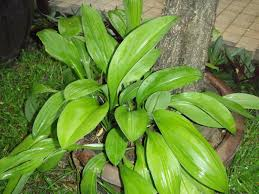 Indoor Plants Low Light Hgtv by Identifying House Plants By Leaves Interior Design