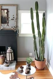 cactus home decor cactus home decor how to care for indoor cacti cactus wallpaper home