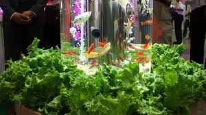 aquaponic therapeutic indoor display diginfo youtube