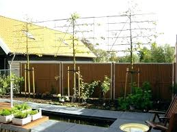 Privacy Garden Ideas Best Trees For Backyard Privacy Designandcode Club