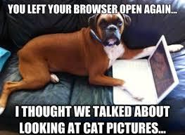 Cat Laptop Meme - dog meme monday funny dog memes cat vs dog meme dog treats