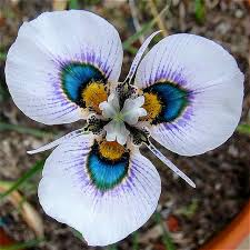 Orchid Plants Aliexpress Com Buy 100 Grains Rare Butterfly Orchid Seeds Flower