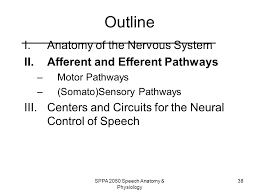 Anatomy And Physiology Of Speech Sppa 2050 Speech Anatomy U0026 Physiology Ppt Video Online Download
