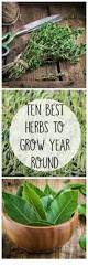 Herbs Indoors Best 25 Best Herbs To Grow Ideas On Pinterest Indoor Herbs