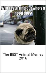Best Animal Memes - memes funniest of all time book the best animal memes 2016