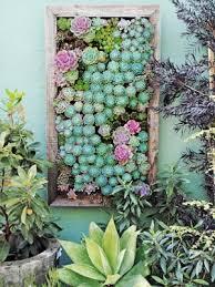 5 gorgeous ways to use succulents hometalk