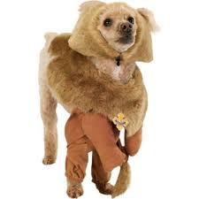 Lion Halloween Costumes Dogs 14 Dog Costumes Images Dog Costumes Halloween
