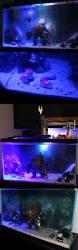 Beautiful Home Fish Tanks by Best 20 Aquarium Fish Ideas On Pinterest Pretty Fish