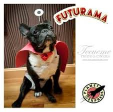 Futurama Halloween Costumes Baby Nibbler Costume Google Holidays Halloween