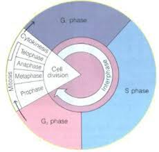 ch 10 11 4 and 12 unit 3 and 4 cell cycle meiosis and
