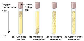 oxygen requirements for pathogenic bacteria microbeonline