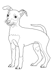 miniature pinscher puppy coloring free printable coloring pages