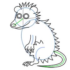 cartoon possum step step drawing lesson