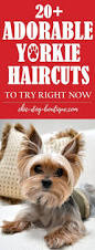 the 25 best yorkie haircuts ideas on pinterest yorkie