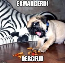 Ermahgerd Animal Memes - pug ermahgerd memes imgflip