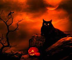 black cats on halloween