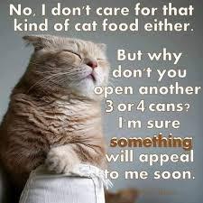 Lost Cat Meme - lost found pets of warner robins ga home facebook