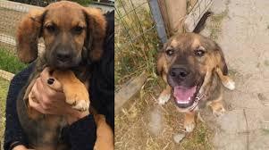 cani in cerca di casa cuccioli in cerca di casa a cairo enpa i padroni siano