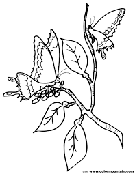 cocoon printable coloring page create a printout or activity
