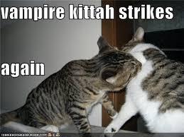 Lol Cat Meme - memes popular memes