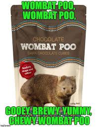 Wombat Memes - wombat imgflip