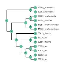 github eaton lab toytree a minimalist tree plotting library