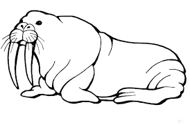 coloring page for walrus walrus coloring page baby seal coloring pages walrus coloring sheet