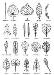 leaf tattoos what do they leaf tattoos designs symbols