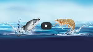 Corporate Video National Aquaculture Group Naqua Corporate Video