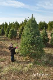 christmas luers christmas tree farm crown point in indiana