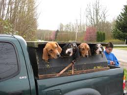 Cheap Coon Hunting Lights 44 Best Fur U003dmoney Images On Pinterest Hunting Dogs Hunting